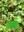 Taller d'herbes remeieres
